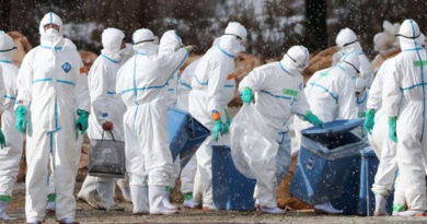 South Korea: Authorities to cull 3 percent of poultry to contain bird flu (H5N6)
